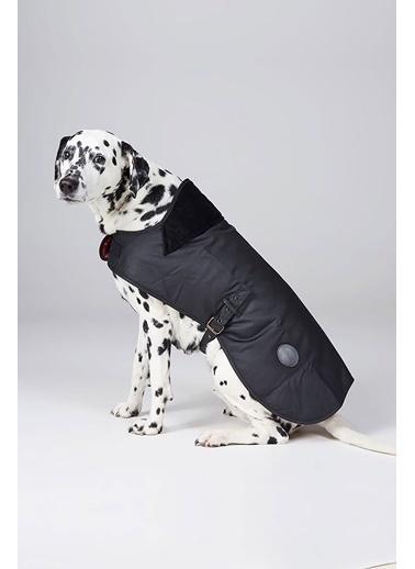 Barbour Yağlı Köpek Kıyafeti Bk71 Black Siyah